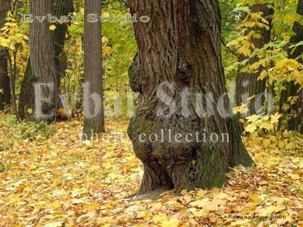 Дерево - животное