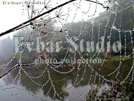 Утро туманное фото обои фон заставка