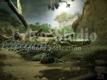 Аллигатор, фото обои фон заставка картинка тема рабочего стола