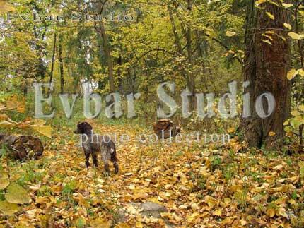 Осенний этюд с охотничьей собакой