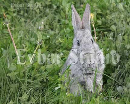 Про зайцев, фото обои фон заставка картинка тема рабочего стола
